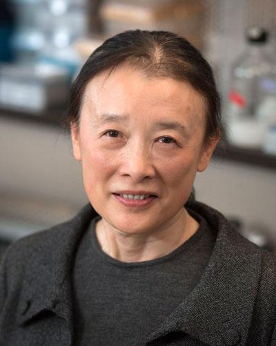 Jiang Xu